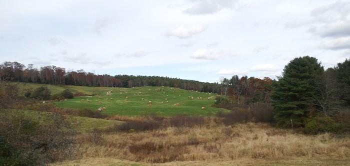 SDIX farm