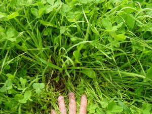 hand in clover-grass